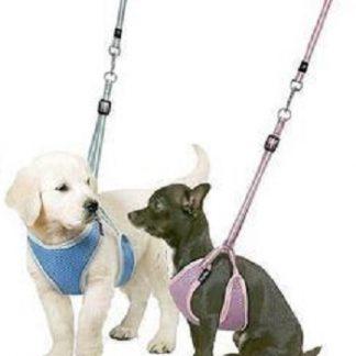 Puppy riem / halsband